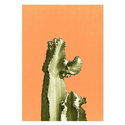 Cactus On Orange Print Art