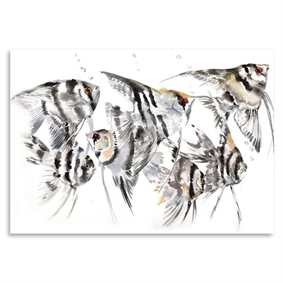 Angelfish Print Art