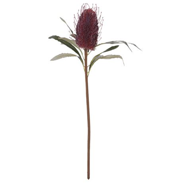 Banksia Cone Size W 10cm x D 10cm x H 61cm in Red Plastic/Fibre/Wire Freedom by Freedom, a Plants for sale on Style Sourcebook