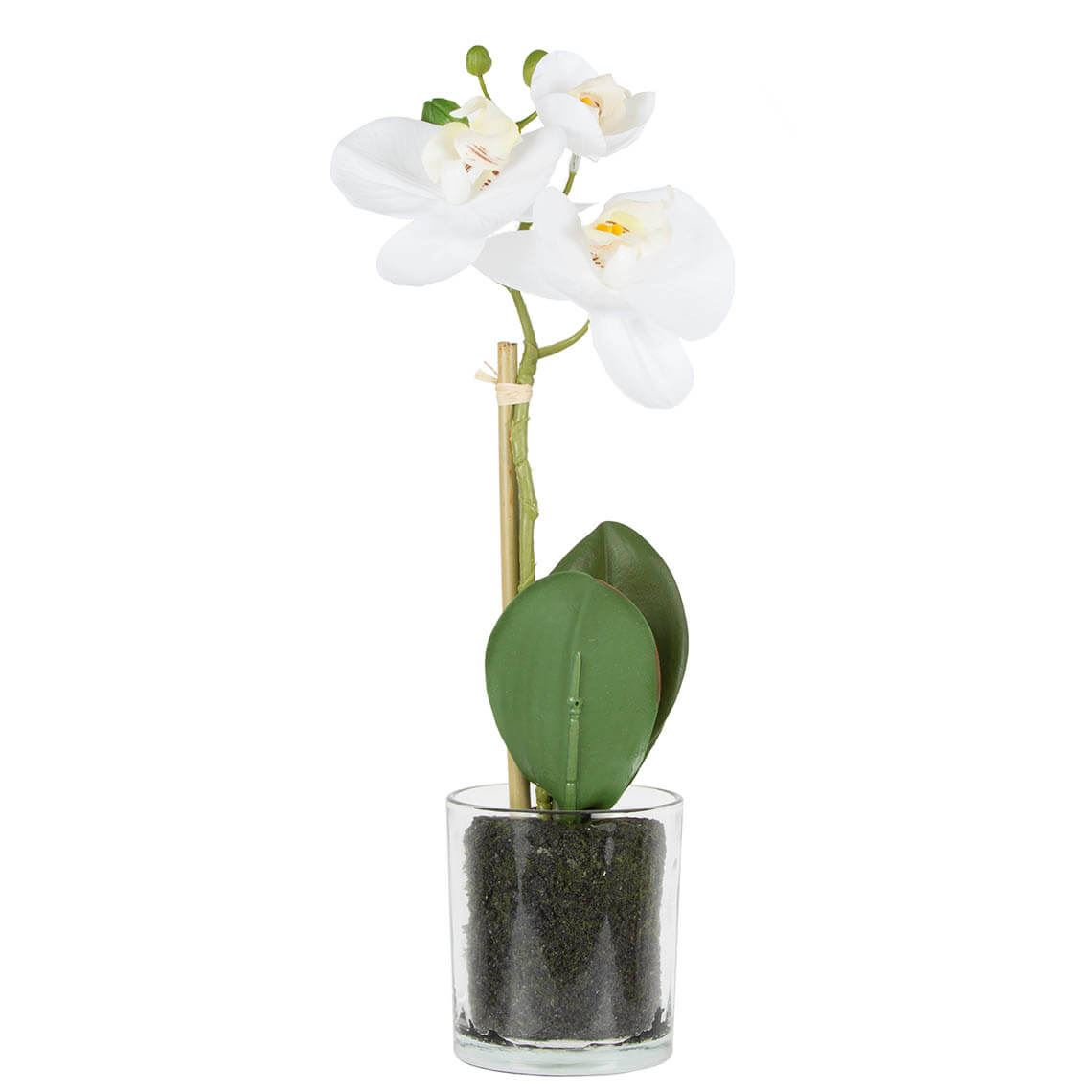 Phalaenopsis Orchid In Glass Vase Size W 13cm x D 20cm x H 33cm in White Plastic/Fabric/Wire Freedom by Freedom, a Plants for sale on Style Sourcebook