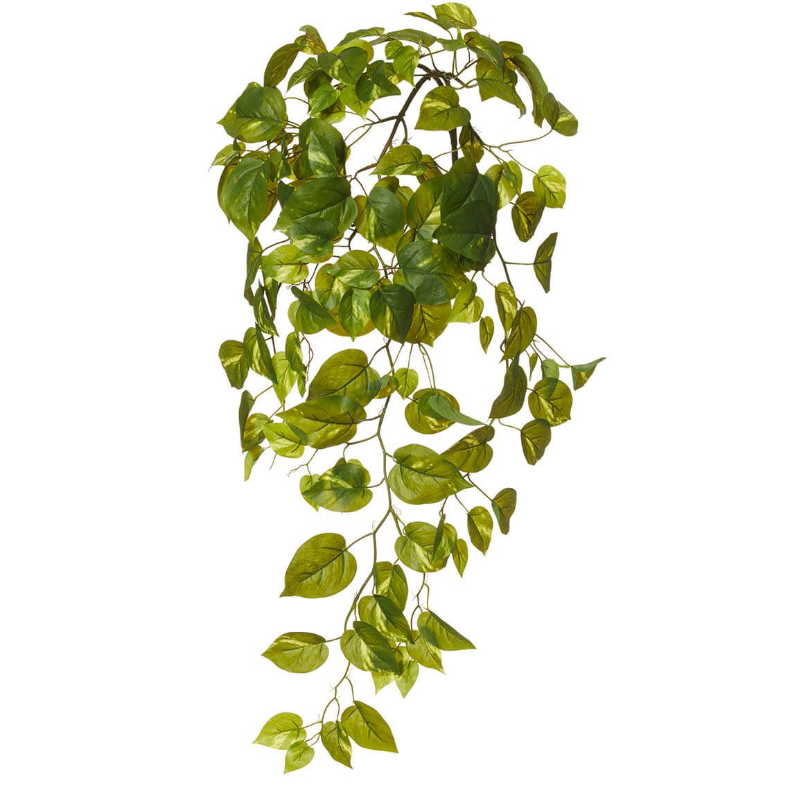 Pothos Vine Size W 30cm x D 20cm x H 60cm in Green Plastic/Wire Freedom by Freedom, a Plants for sale on Style Sourcebook