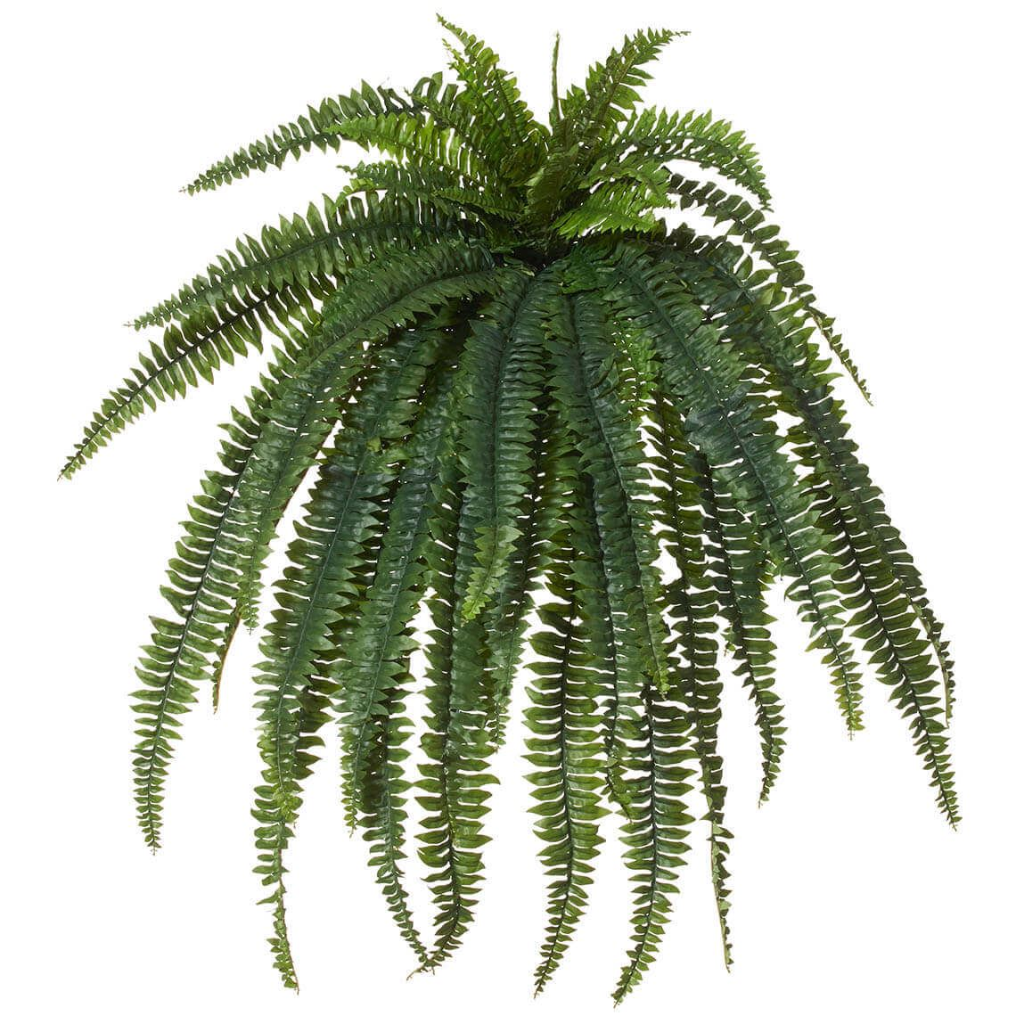 Boston Fern Giant Size W 100cm x D 100cm x H 122cm in Green Plastic/Wire Freedom by Freedom, a Plants for sale on Style Sourcebook