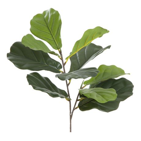 Fiddle Leaf Stem Size W 30cm x D 20cm x H 62cm in Green Plastic/Polyester Freedom by Freedom, a Plants for sale on Style Sourcebook