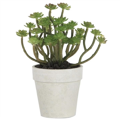 Durie Potted Artificial Succulents by Diaz Design, a Plants for sale on Style Sourcebook