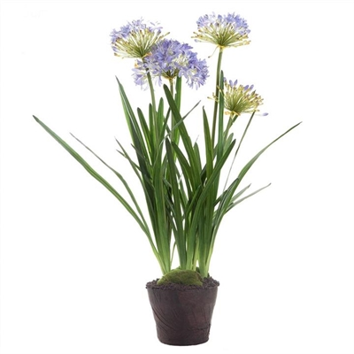 Artificial Agapanthus in Pot by Florabelle, a Plants for sale on Style Sourcebook