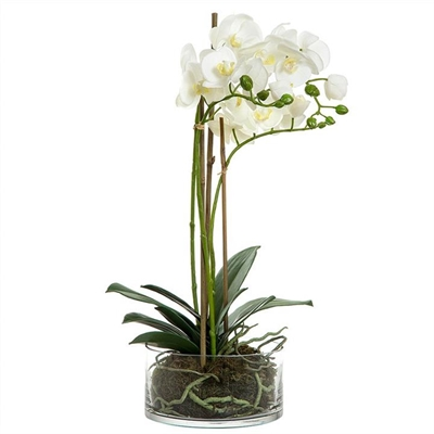 Artificial Orchid in Round Glass Vase, White by Florabelle, a Plants for sale on Style Sourcebook