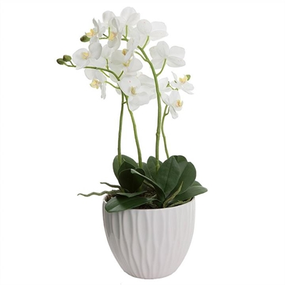 Artificial Orchid in Ceramic Pot, White by Florabelle, a Plants for sale on Style Sourcebook