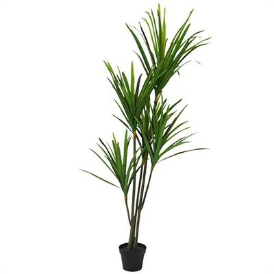 Set of 2 Artificial Dracena in Pot by Searles, a Plants for sale on Style Sourcebook