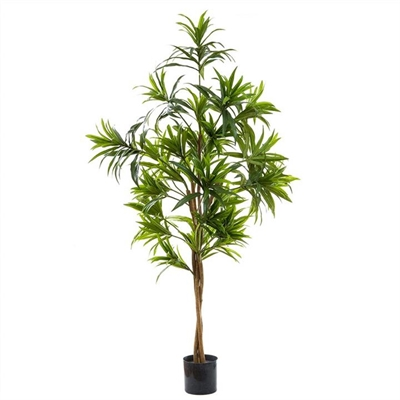 Artificial Dracaena Reflexa, 130cm by Florabelle, a Plants for sale on Style Sourcebook