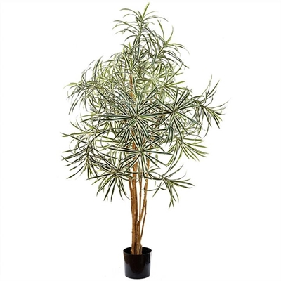Artificial Variegated Dracaena Reflexa, 120cm by Florabelle, a Plants for sale on Style Sourcebook