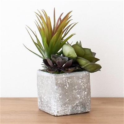Sora Succulents in Square Stone Planter by Casa Bella, a Plants for sale on Style Sourcebook