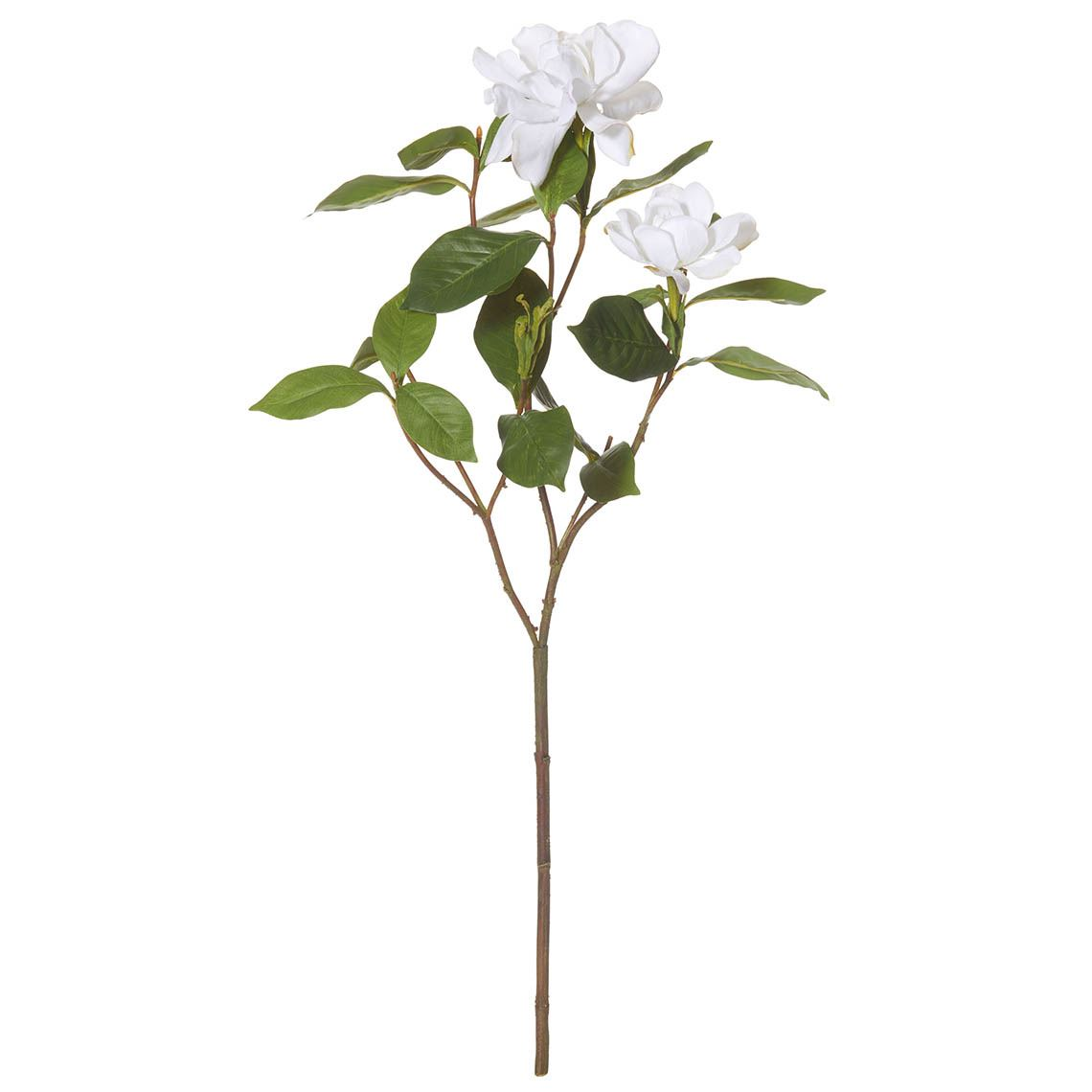 Gardenia Flower Spra Size W 28cm x D 20cm x H 56cm in White Plastic/Fabric/Wire Freedom by Freedom, a Plants for sale on Style Sourcebook