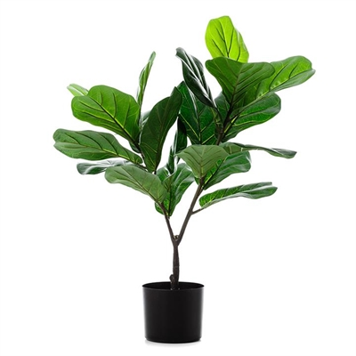 Home Republic Potted Plants   Fiddle Fig 190cm - Fiddlefig By Adairs by Home Republic, a Plants for sale on Style Sourcebook