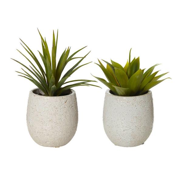 AGAVES IN TUB POTS, SET OF 2 by Rogue, a Plants for sale on Style Sourcebook