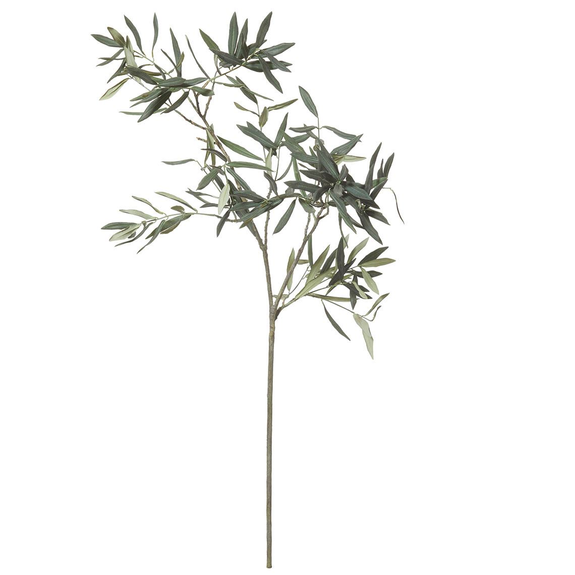 Olive Branch Size W 50cm x D 40cm x H 120cm in Green Plastic/Wire Freedom by Freedom, a Plants for sale on Style Sourcebook