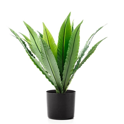 Home Republic Potted Plants   Dracena 65cm By Adairs by Home Republic, a Plants for sale on Style Sourcebook