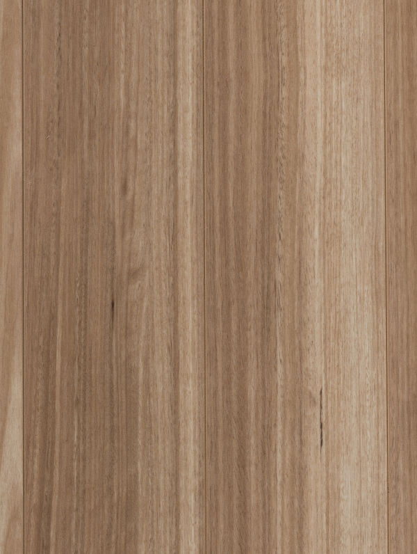 Barwon Blackbutt by Plantino Laminate Noosa, a Light Neutral Laminate for sale on Style Sourcebook