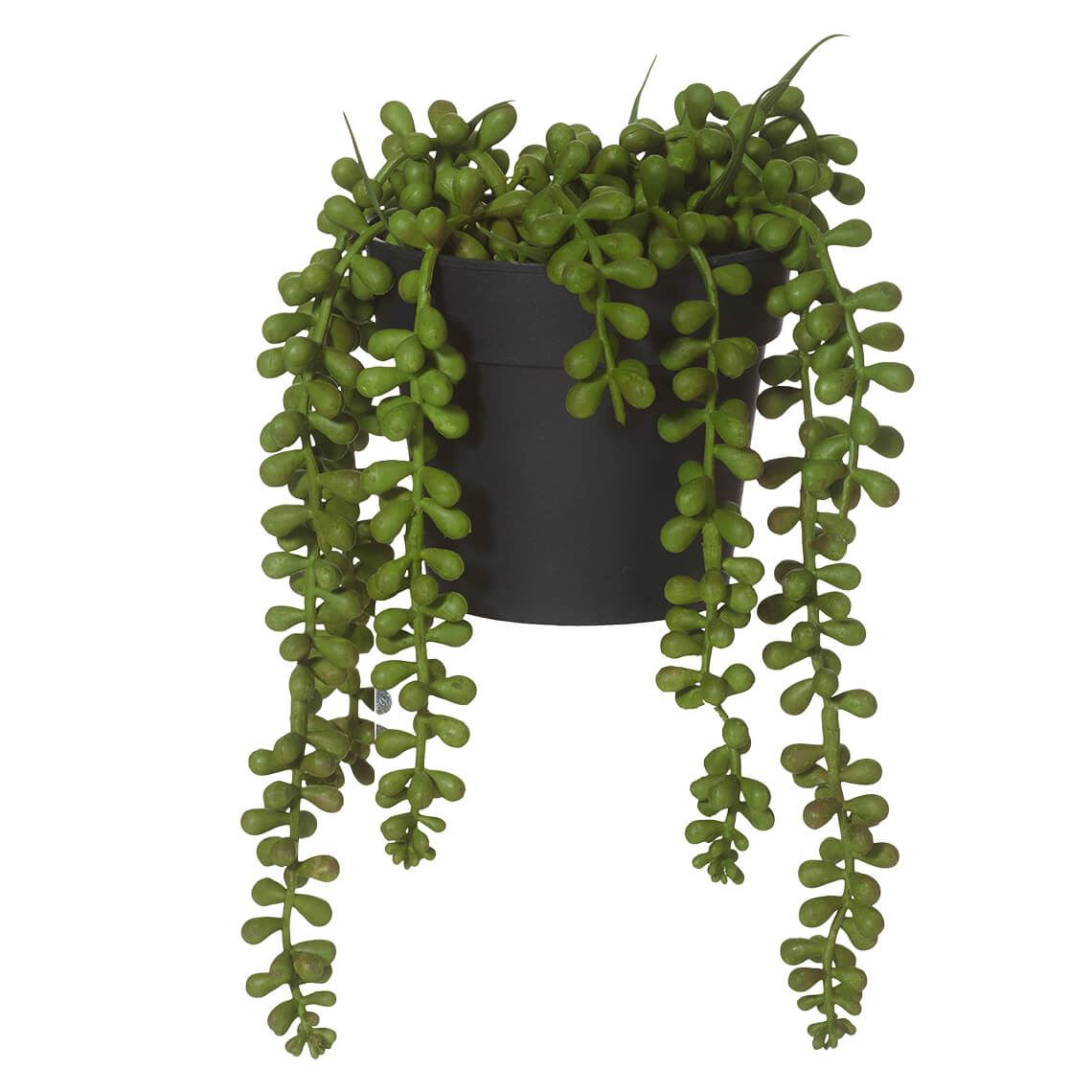 String Of Pearls Size W 14cm x D 14cm x H 23cm in Green Plastic/Fabric/Wire Freedom by Freedom, a Plants for sale on Style Sourcebook