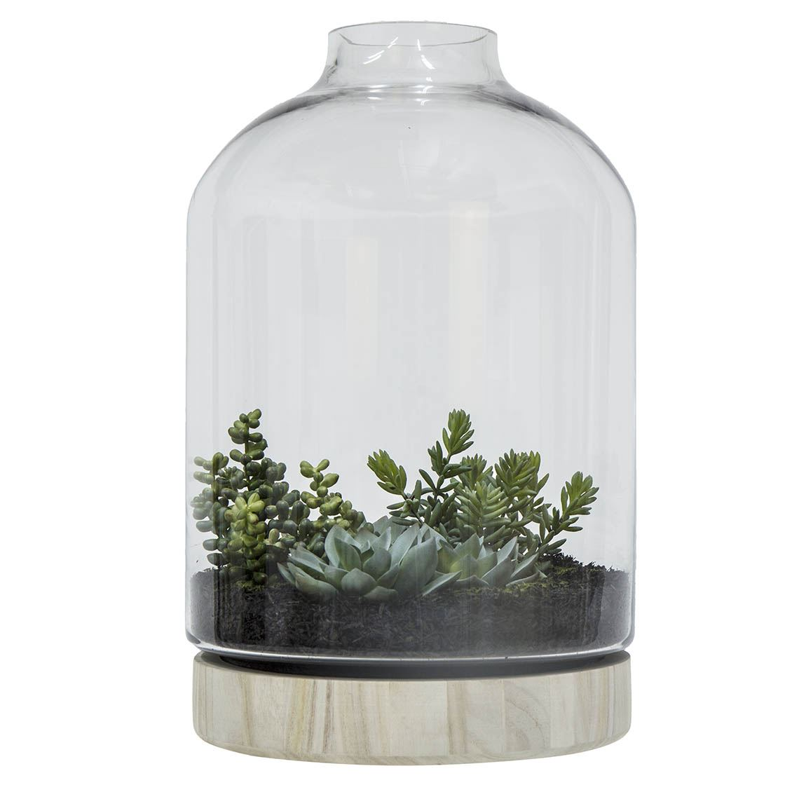 Rogue Succulent Terrarium Size W 27cm x D 27cm x H 50cm in Green Plastic/Glass Freedom by Freedom, a Plants for sale on Style Sourcebook