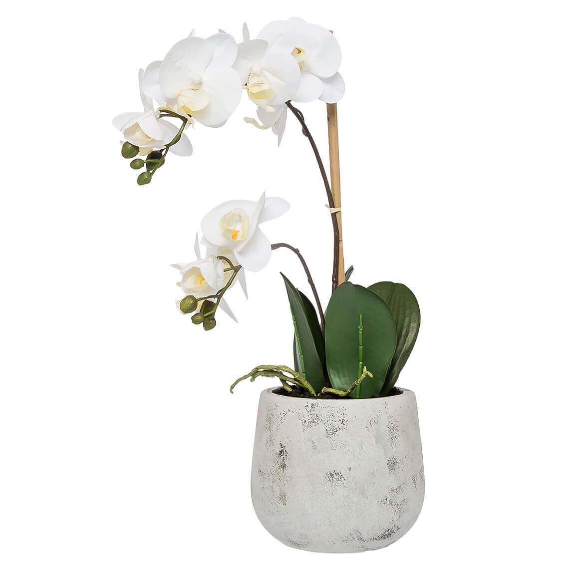 Phalaenopsis Potted Orchid Size W 28cm x D 18cm x H 56cm in White Plastic/Fabric/Wire Freedom by Freedom, a Plants for sale on Style Sourcebook
