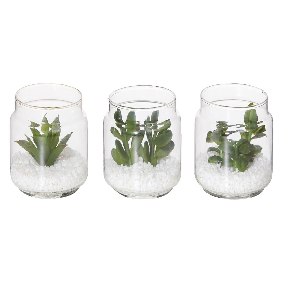 Mini Succulents Assorted Size W 9cm x D 9cm x H 7cm in Green Plastic/Glass Freedom by Freedom, a Plants for sale on Style Sourcebook