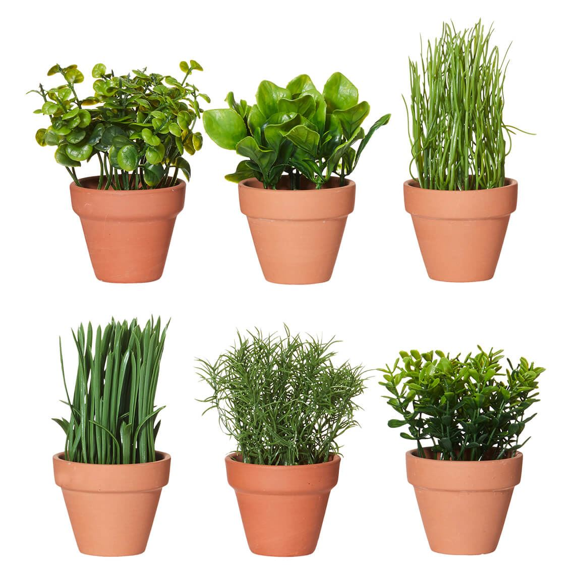 Mini Herbs In Pot Assorted Size W 7cm x D 7cm x H 16cm in Green Plastic/Concrete Freedom by Freedom, a Plants for sale on Style Sourcebook