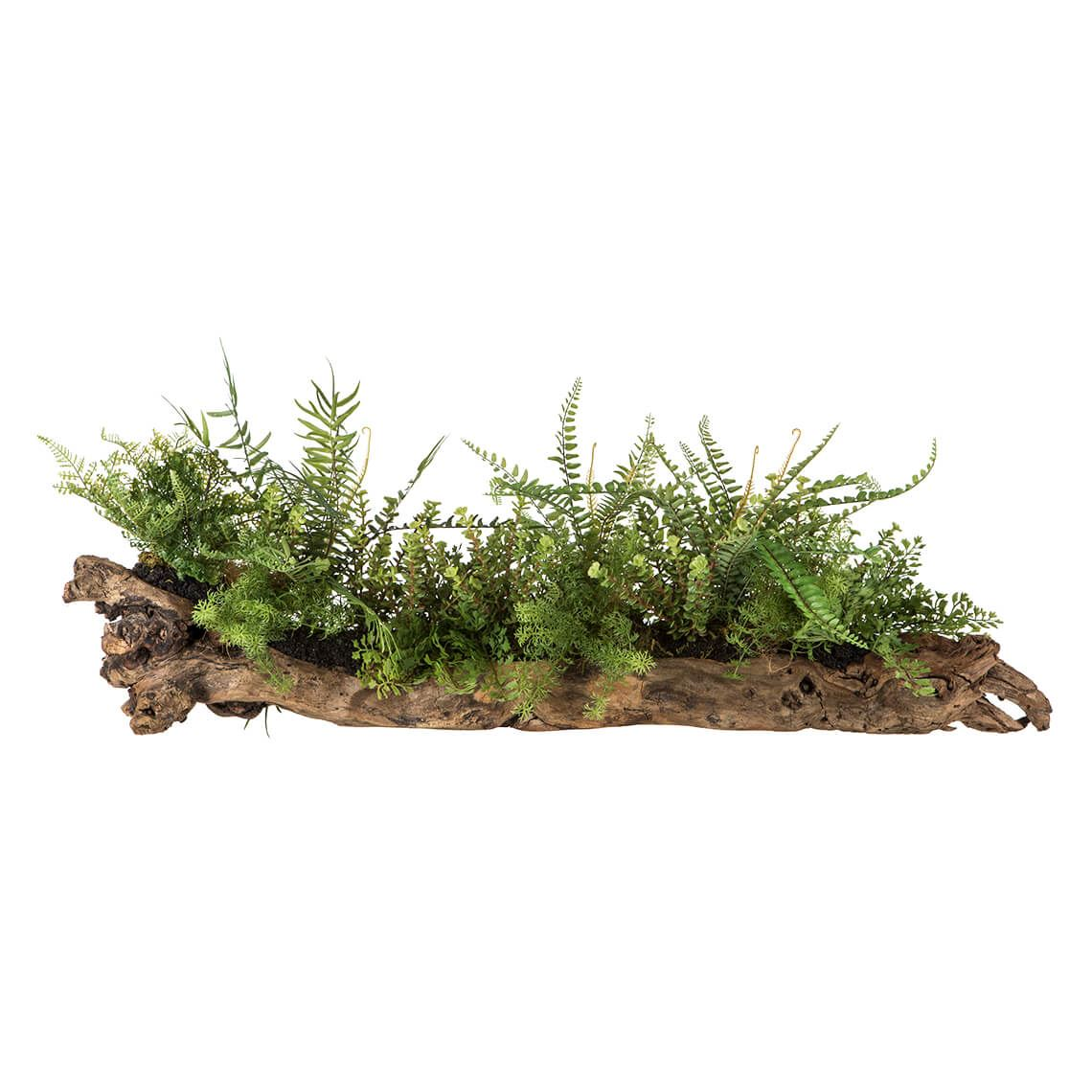 Fern Mix In Trunk Size W 22cm x D 4cm x H 21cm in Natural/Green Plastic/Wood Freedom by Freedom, a Plants for sale on Style Sourcebook
