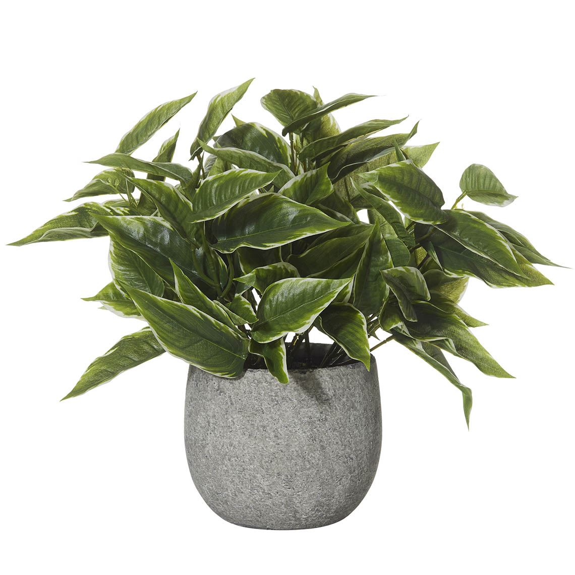 Mini Hosta Artificial Foliage Size W 34cm x D 36cm x H 48cm in Green Plastic/Ceramic Freedom by Freedom, a Plants for sale on Style Sourcebook