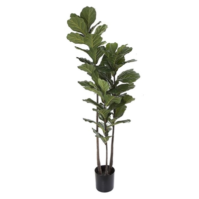 Artificial Fiddle-Leaf Tree, 3 Trunk Plastic Green Florabelle by Florabelle, a Plants for sale on Style Sourcebook