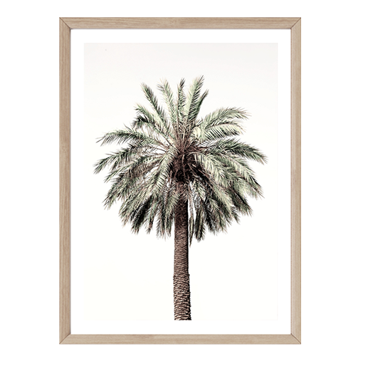 Strong Palm by Boho Art & Styling, a Prints for sale on Style Sourcebook
