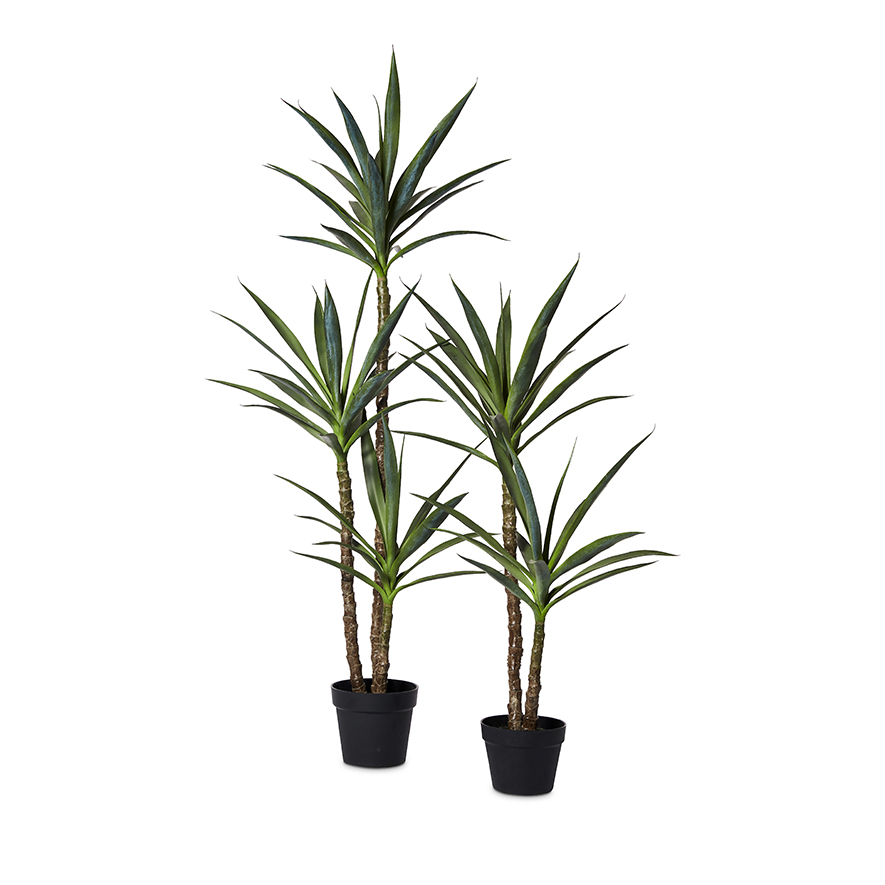 Heneken Plant by Adairs, a Plants for sale on Style Sourcebook