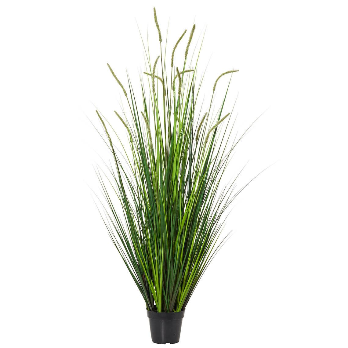 Pond Grass Size W 60cm x D 60cm x H 140cm in Green Plastic/Fabric/Wire Freedom by Freedom, a Plants for sale on Style Sourcebook