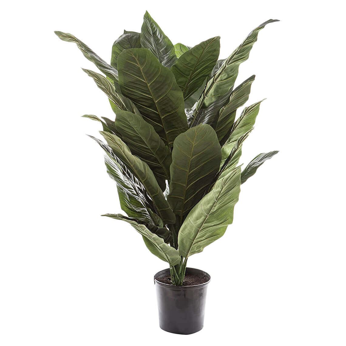 Spathiphyllum Giant Artificial Flower Size W 73cm x D 78cm x H 128cm in Green Freedom by Freedom, a Plants for sale on Style Sourcebook