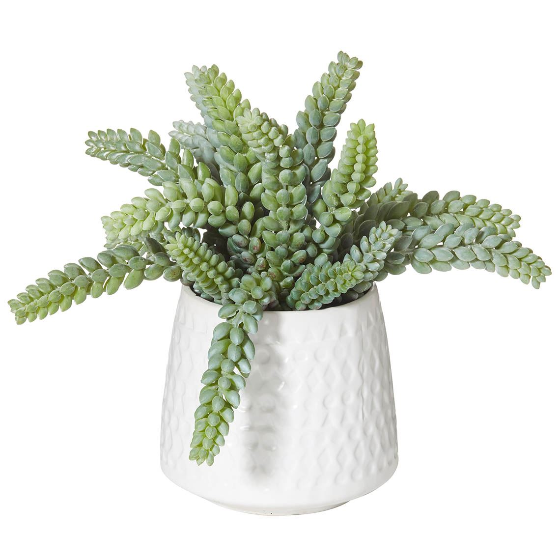 Sandflower Zolin In Pot Size W 32cm x D 32cm x H 28cm Plastic/Wire Freedom by Freedom, a Plants for sale on Style Sourcebook