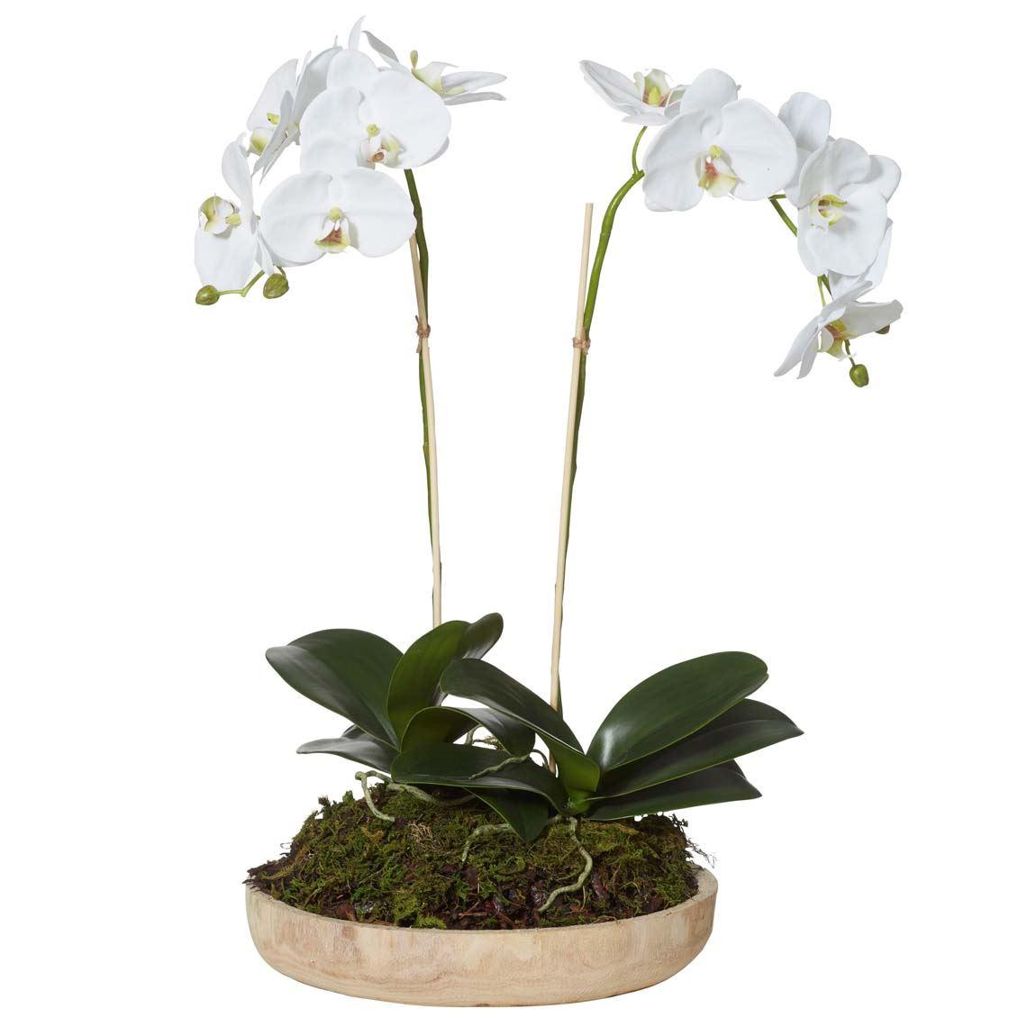 Phalaenopsis Orchid Size W 32cm x D 32cm x H 56cm in White Plastic/Fabric/Wire Freedom by Freedom, a Plants for sale on Style Sourcebook
