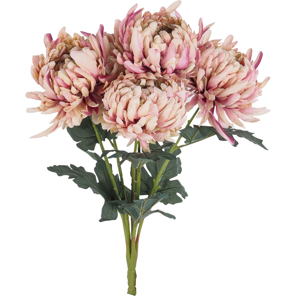 Blume Blush Chrysanthemum Bunch X5 52cm by Early Settler, a Plants for sale on Style Sourcebook