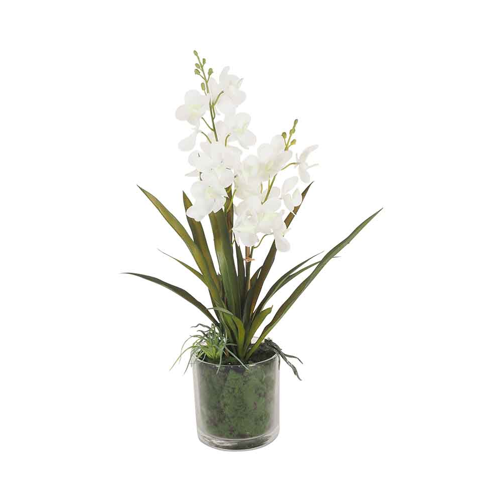 Sunshine Ascocenda Orchid Spray ×2 Pink Glass Vase 66cm by Early Settler, a Plants for sale on Style Sourcebook