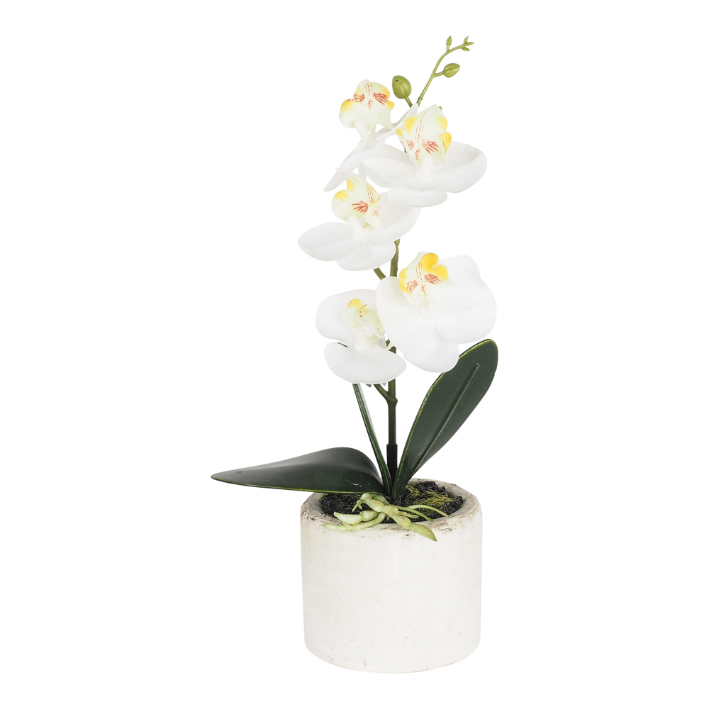 Sunshine Phalaenopsis Spray×1 Resin Vase 24 Cm by Early Settler, a Plants for sale on Style Sourcebook