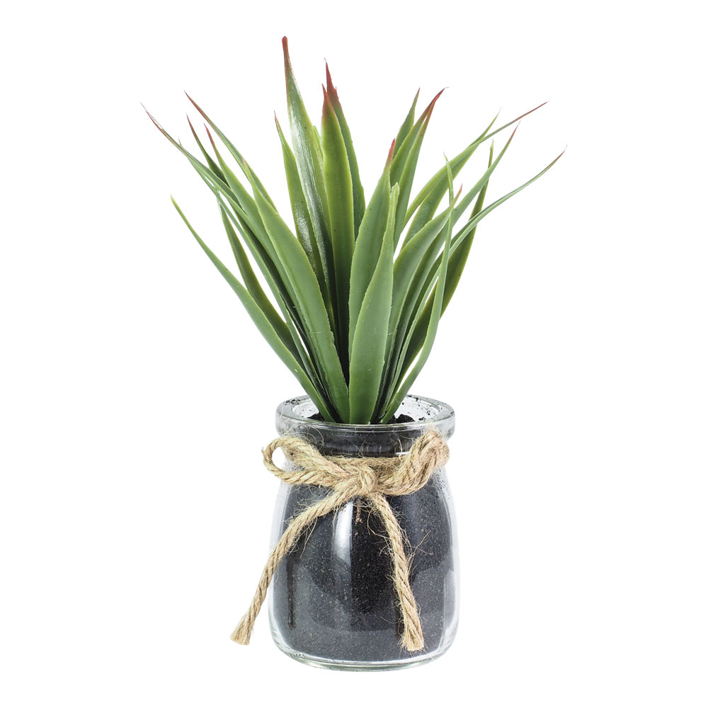 Floret Plant In Glass Pot 17cm by Early Settler, a Plants for sale on Style Sourcebook