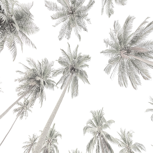 Palm Tree Mural Removable Wallpaper by Boho Art & Styling, a Wallpaper for sale on Style Sourcebook