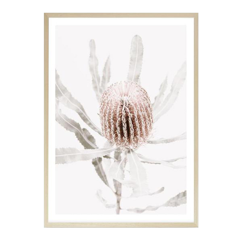 Banksia I Photo Art Print by The Print Emporium, a Prints for sale on Style Sourcebook