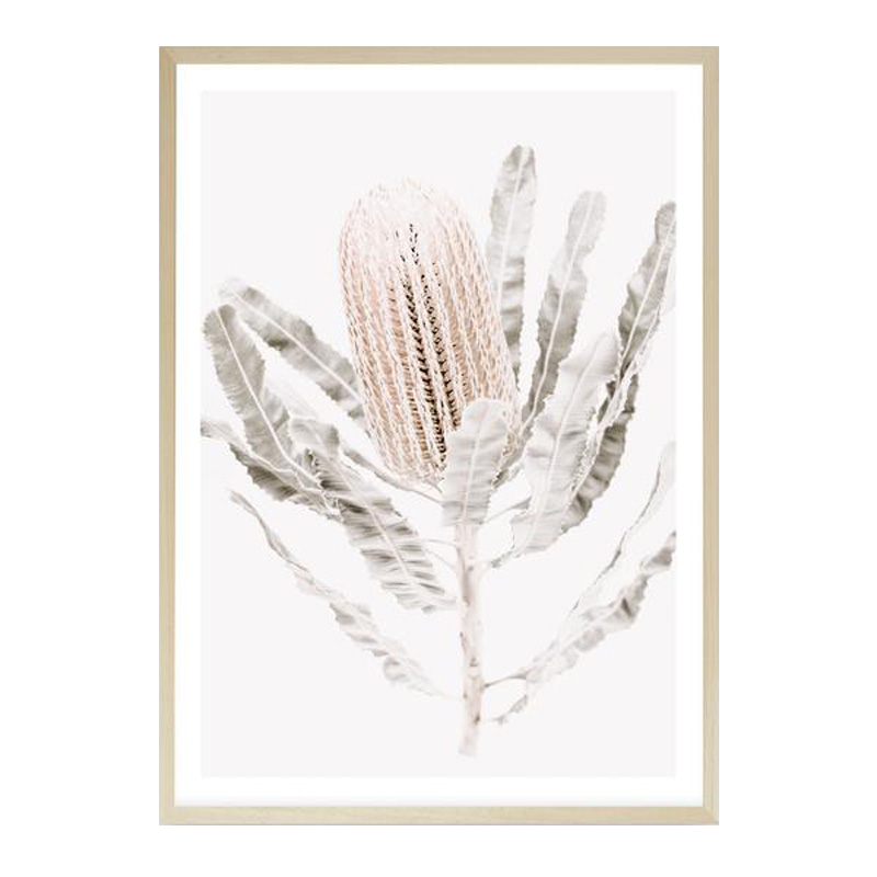 Banksia III Photo Art Print by The Print Emporium, a Prints for sale on Style Sourcebook