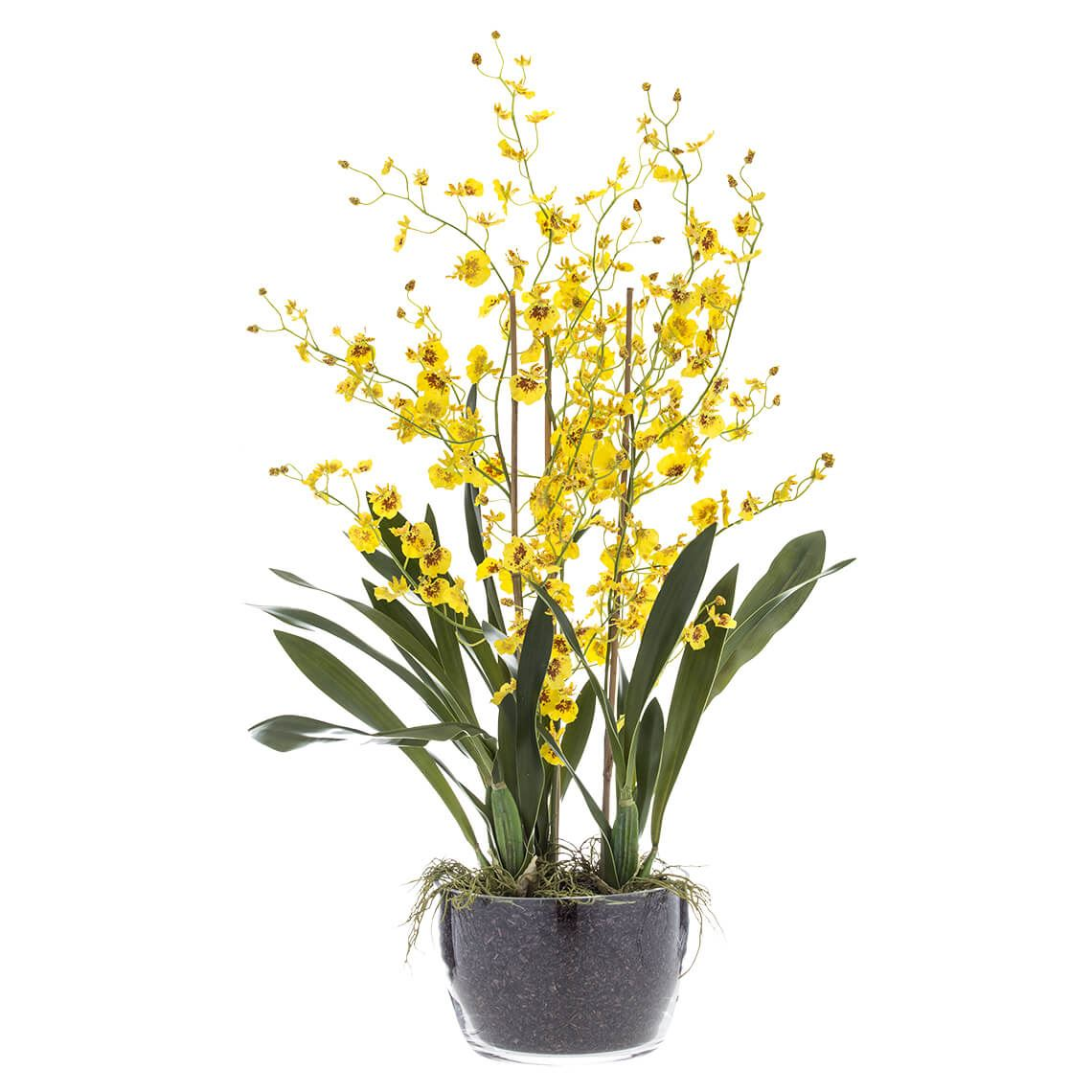 Dancing Lady Orchid Large Nz Only Size W 50cm x D 60cm x H 85cm in Yellow/Green Plastic/Glass Freedom by Freedom, a Plants for sale on Style Sourcebook