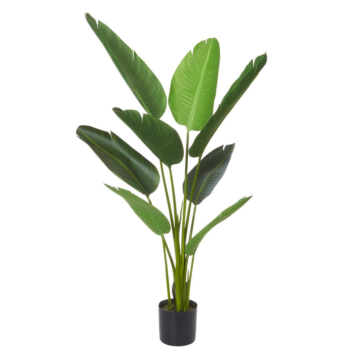 Giant Bird Of Paradise Plant Size W 78cm x D 78cm x H 122cm in Green Freedom