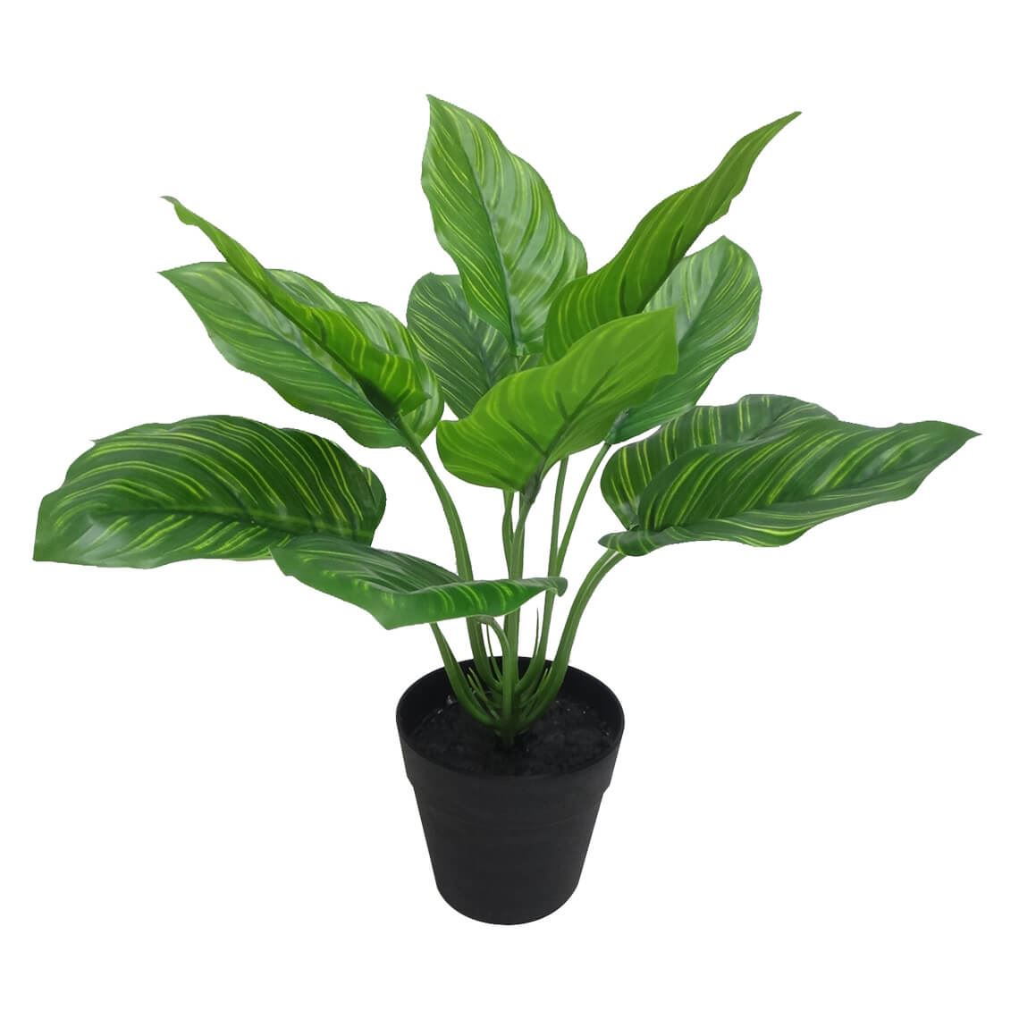 Watermelon Leaf Plant Size W 30cm x D 30cm x H 25cm in Variegated Plastic/Wire Freedom