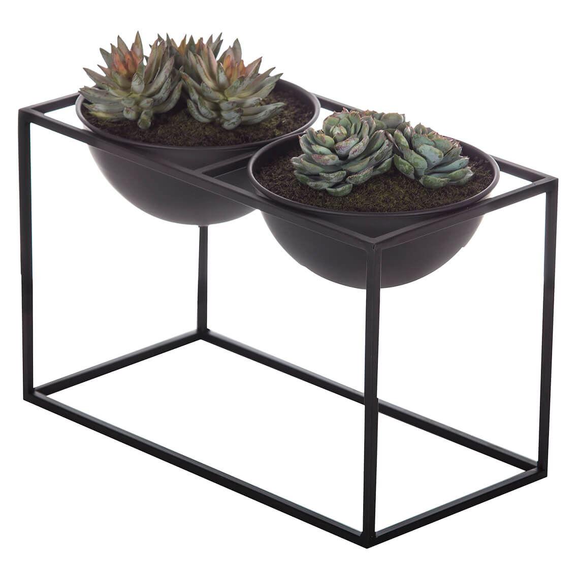 Echeveria Mix Rectangle Planter Size W 32cm x D 16cm x H 25cm in Black Freedom