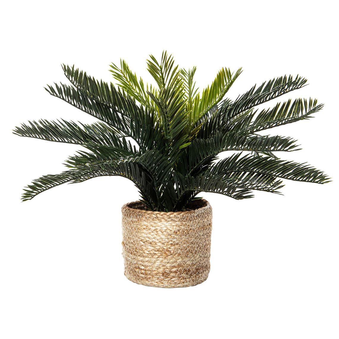 Cycas Bush Size W 51cm x D 51cm x H 41cm in Green Plastic/Ceramic Freedom