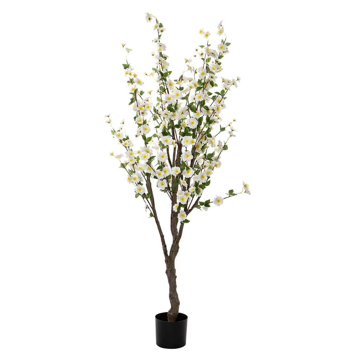 Blossom Tree Size W 70cm x D 70cm x H 150cm in White Freedom