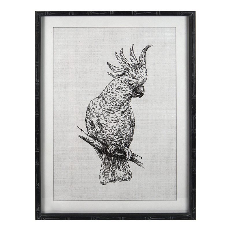 CLANCY COCKATOO FRAMED PRINT in 54 x 74cm