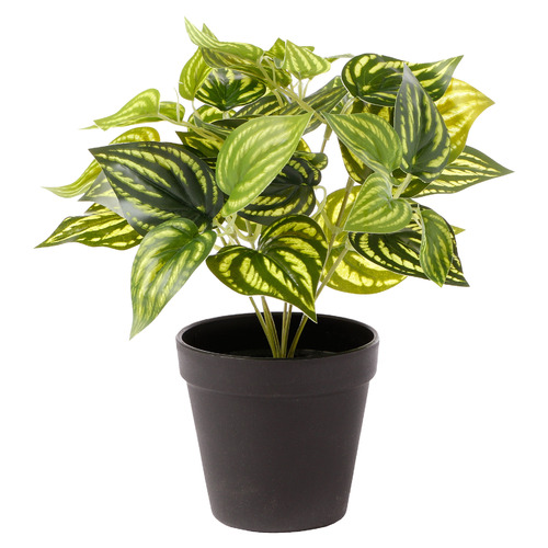 28cm Potted Faux Water Plant